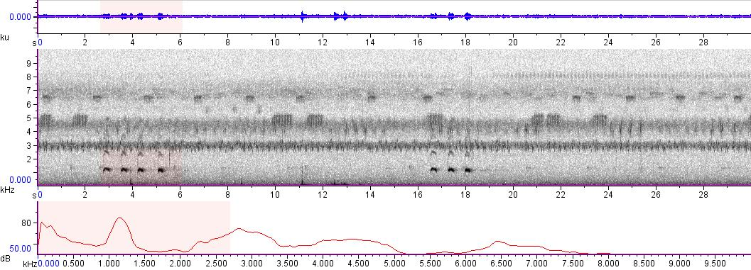 Sonogram of recording #AV 6632