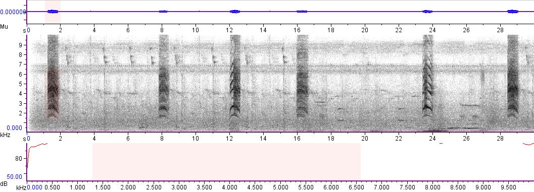 Sonogram of recording #AV 6686