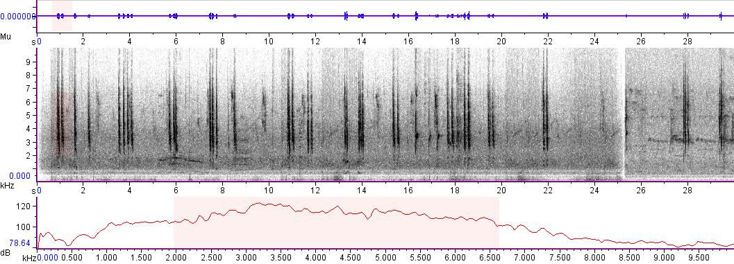Sonogram of recording #AV 6695