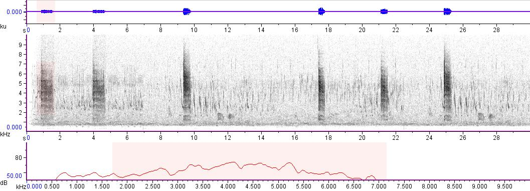 Sonogram of recording #AV 6746