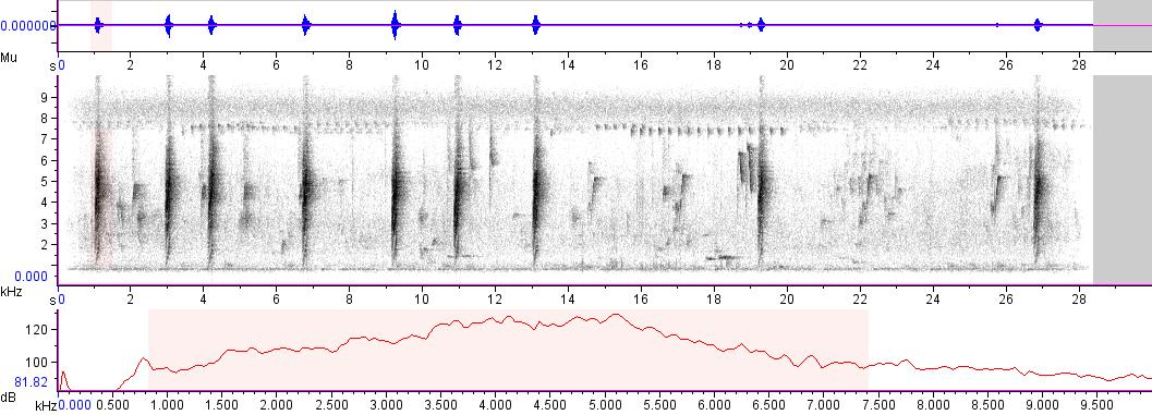 Sonogram of recording #AV 6750