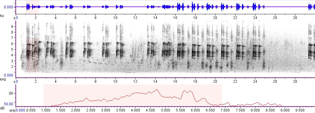Sonogram of recording #AV 6761