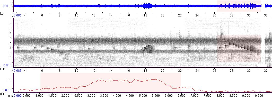 Sonogram of recording #AV 6795
