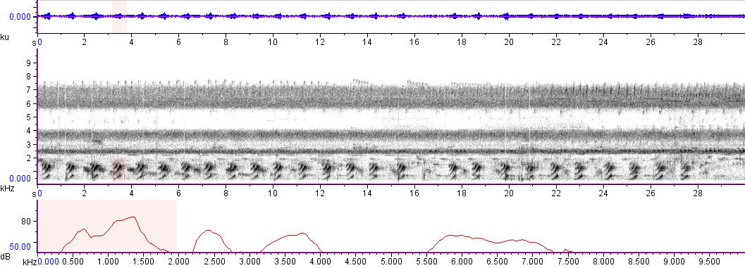 Sonogram of recording #AV 6824