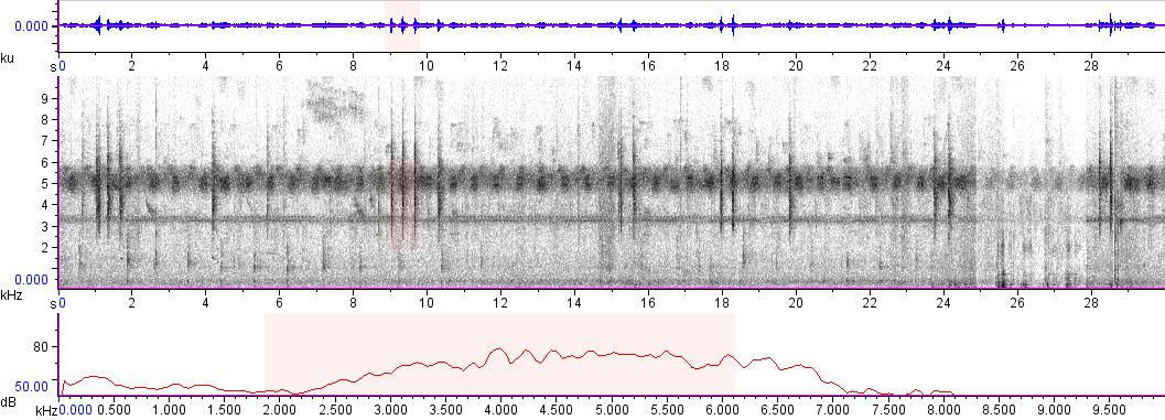 Sonogram of recording #AV 6944
