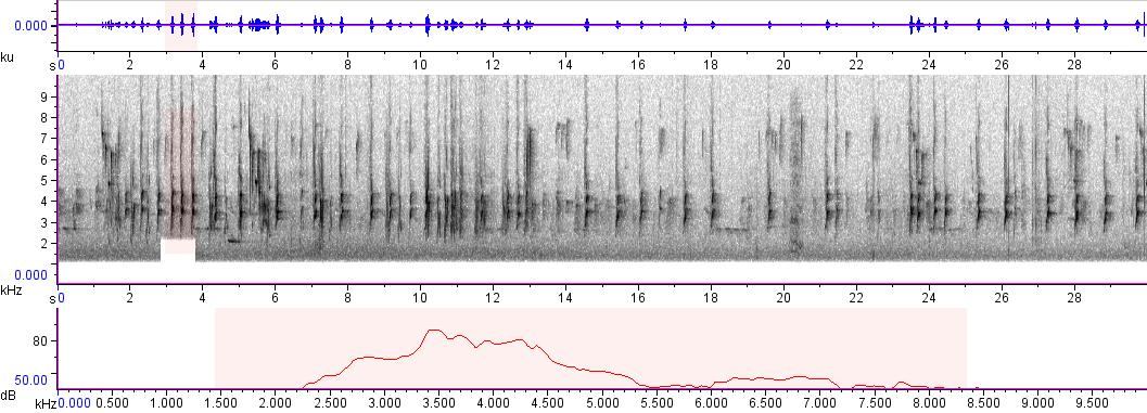 Sonogram of recording #AV 716