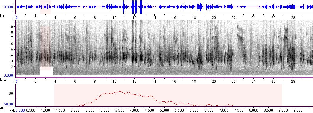 Sonogram of recording #AV 719