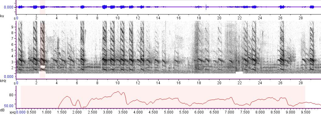 Sonogram of recording #AV 733