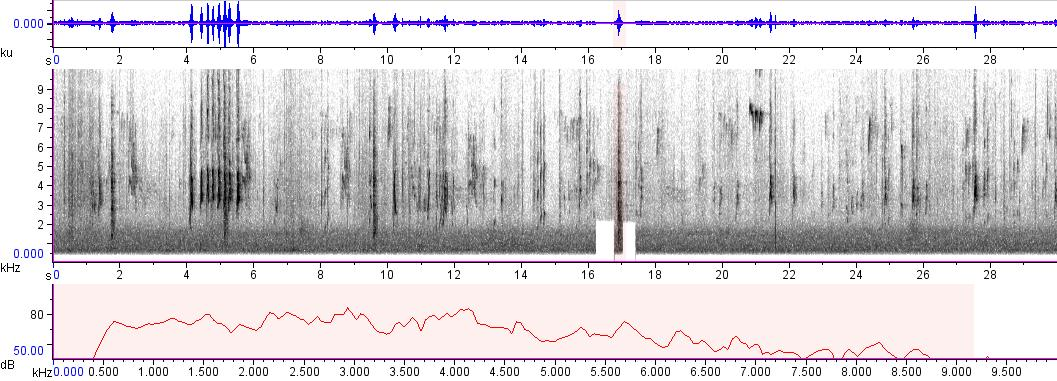 Sonogram of recording #AV 760
