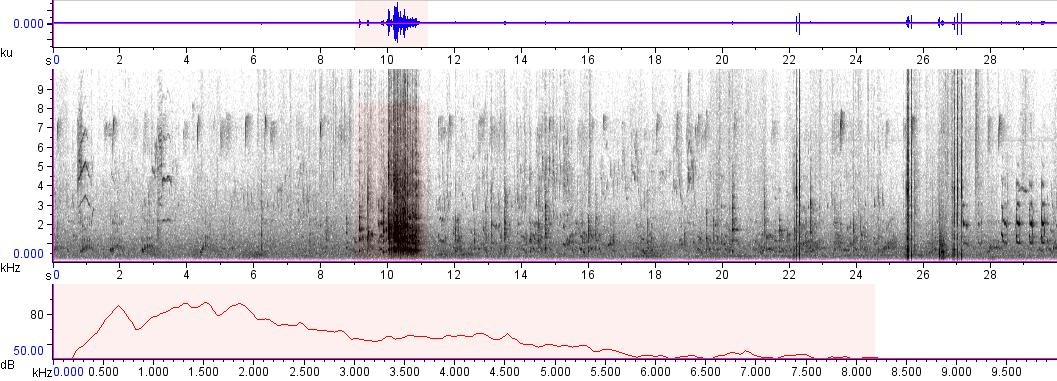 Sonogram of recording #AV 761