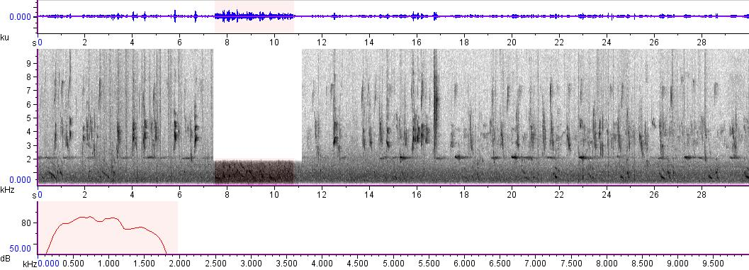 Sonogram of recording #AV 766