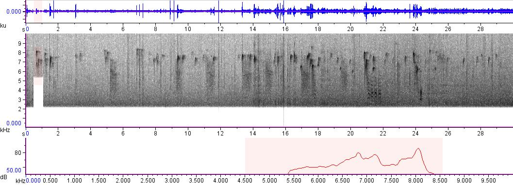Sonogram of recording #AV 782
