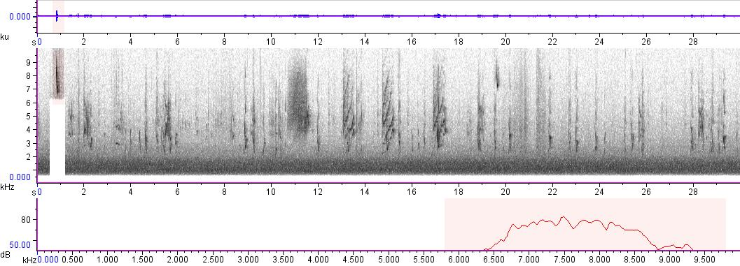 Sonogram of recording #AV 799