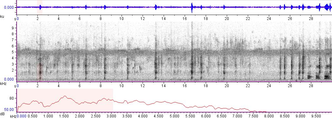 Sonogram of recording #AV 7021