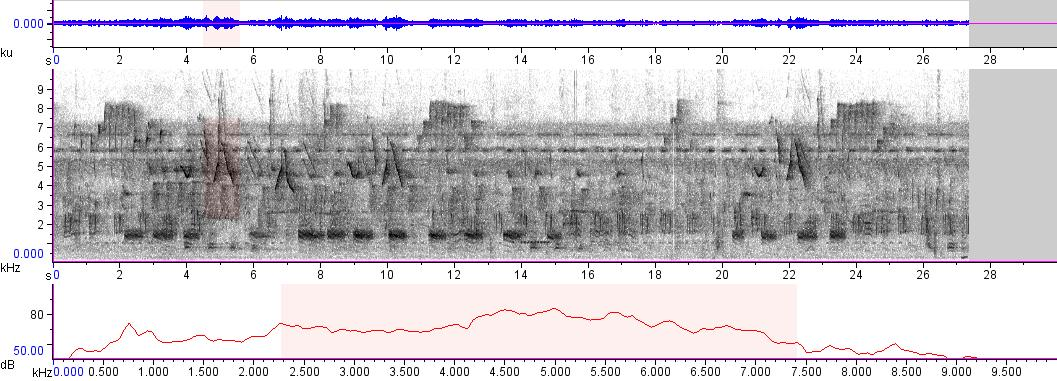 Sonogram of recording #AV 7079