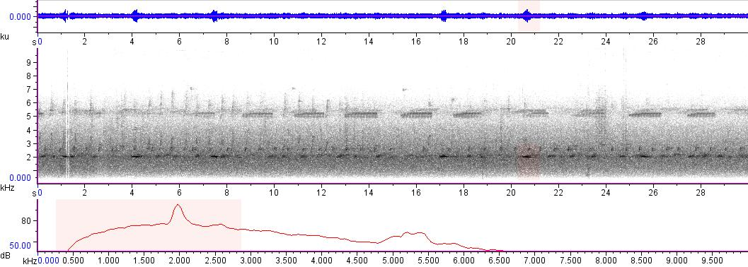Sonogram of recording #AV 7132