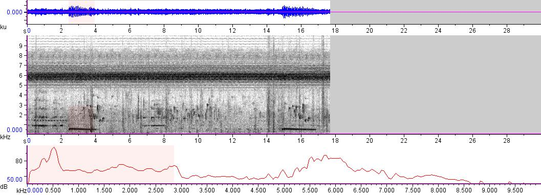 Sonogram of recording #AV 7155