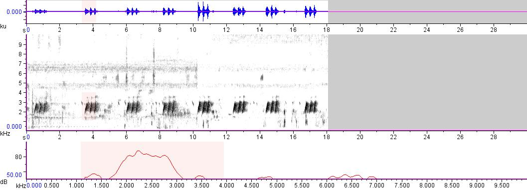Sonogram of recording #AV 7156