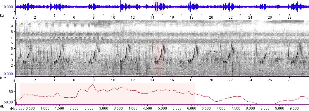 Sonogram of recording #AV 7157