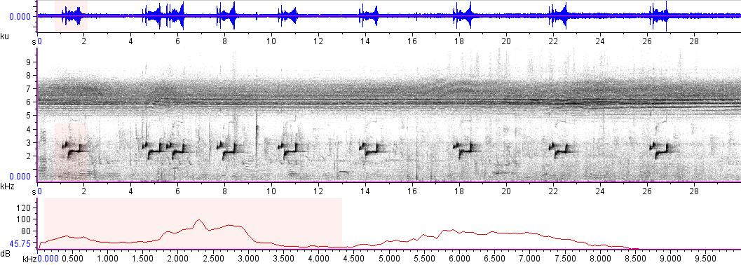 Sonogram of recording #AV 7236