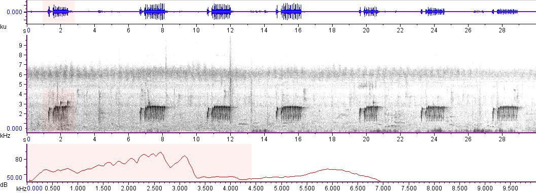 Sonogram of recording #AV 7237