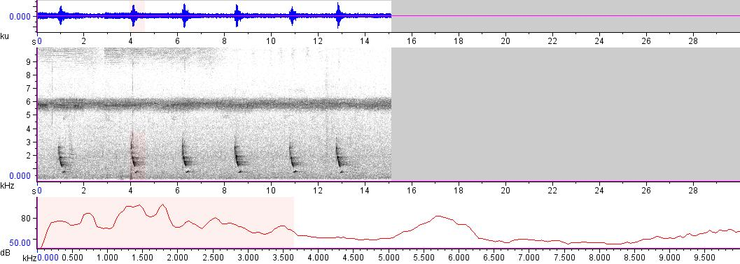 Sonogram of recording #AV 7262