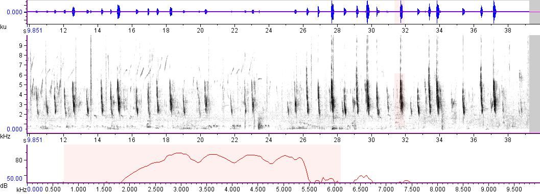 Sonogram of recording #AV 7268