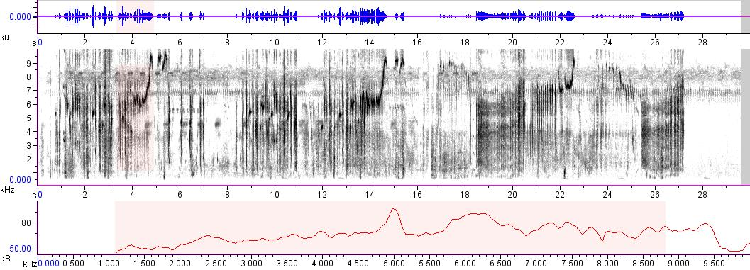 Sonogram of recording #AV 7294