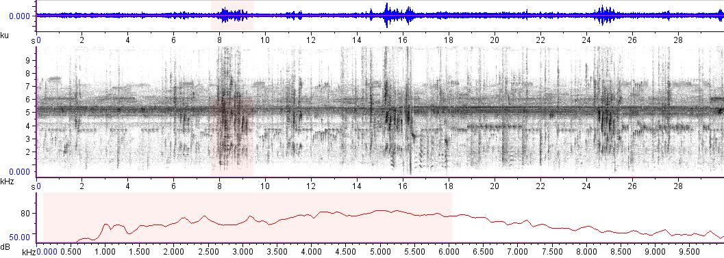 Sonogram of recording #AV 7319