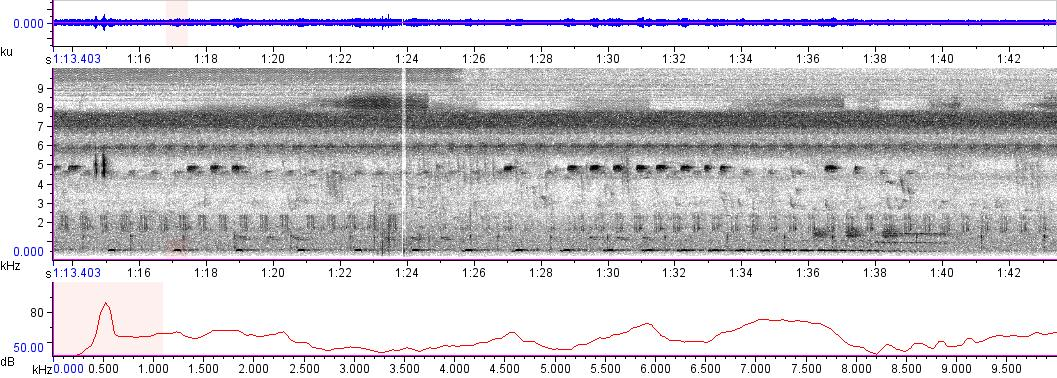 Sonogram of recording #AV 7334