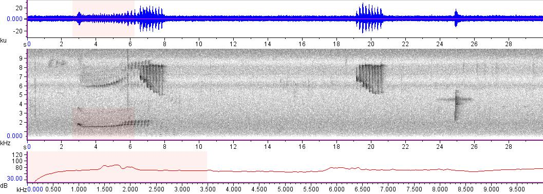 Sonogram of recording #AV 7354