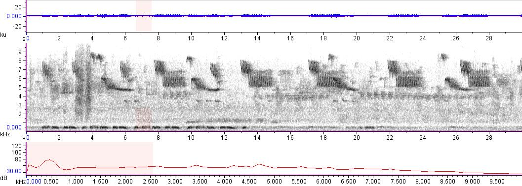 Sonogram of recording #AV 7470