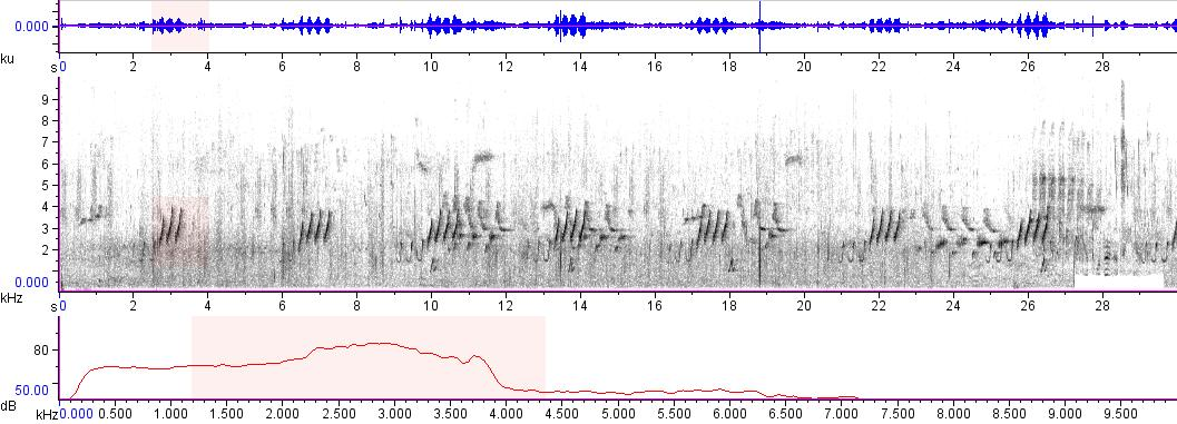Sonogram of recording #AV 7506
