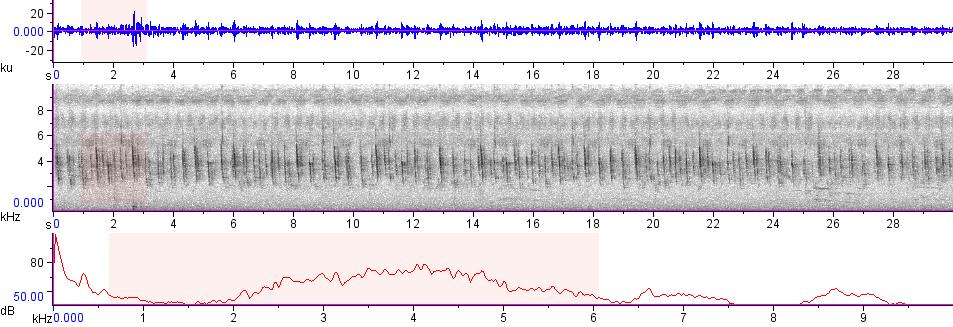 Sonogram of recording #AV 7536
