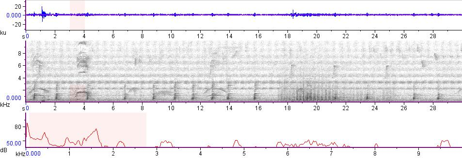 Sonogram of recording #AV 7551