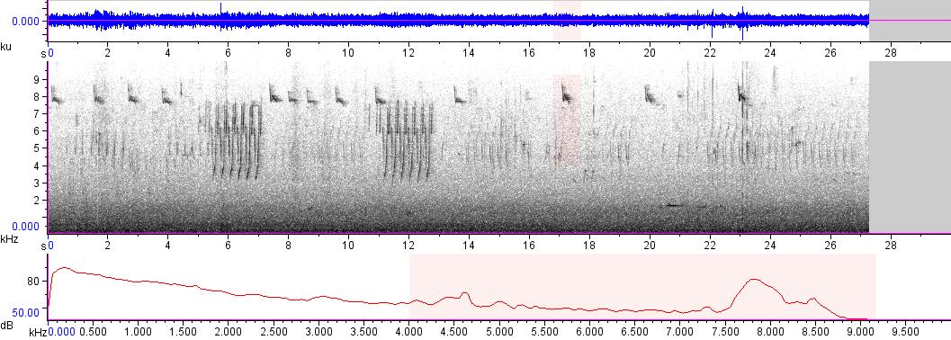 Sonogram of recording #AV 7580