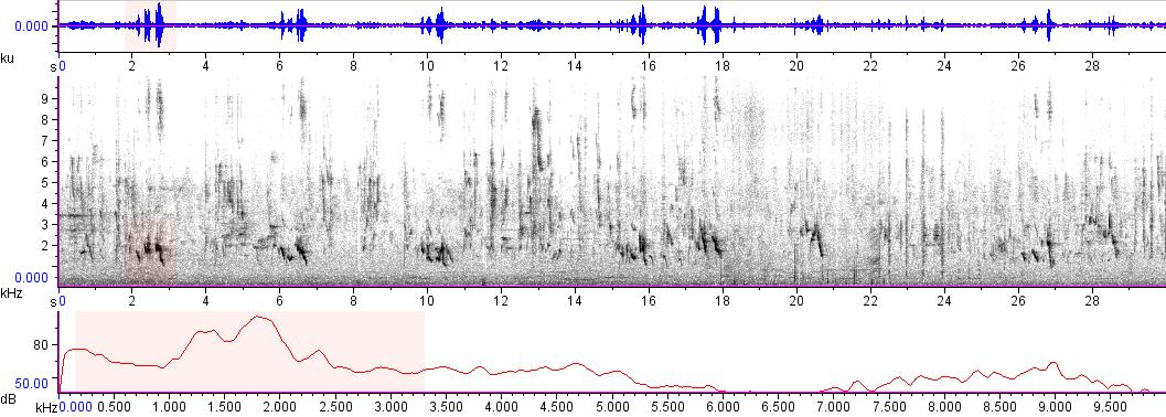 Sonogram of recording #AV 7589