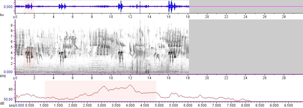 Sonogram of recording #AV 7593