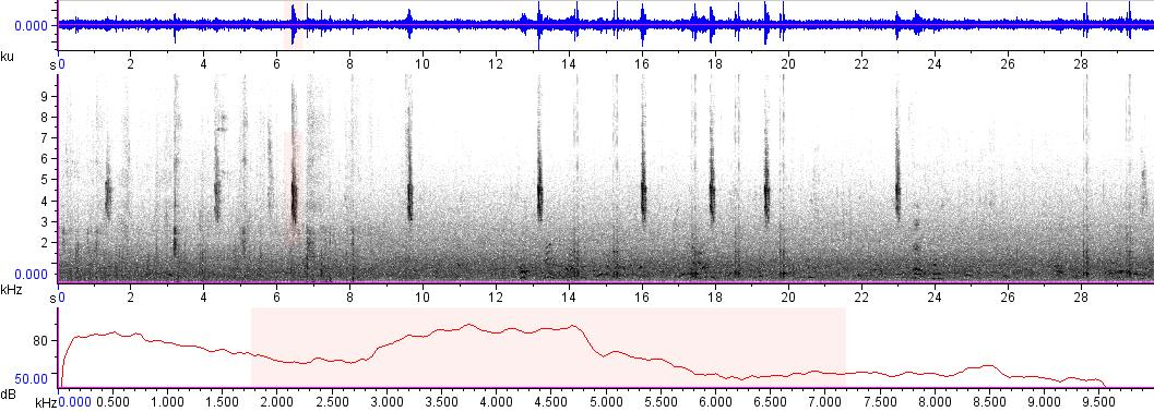 Sonogram of recording #AV 7608