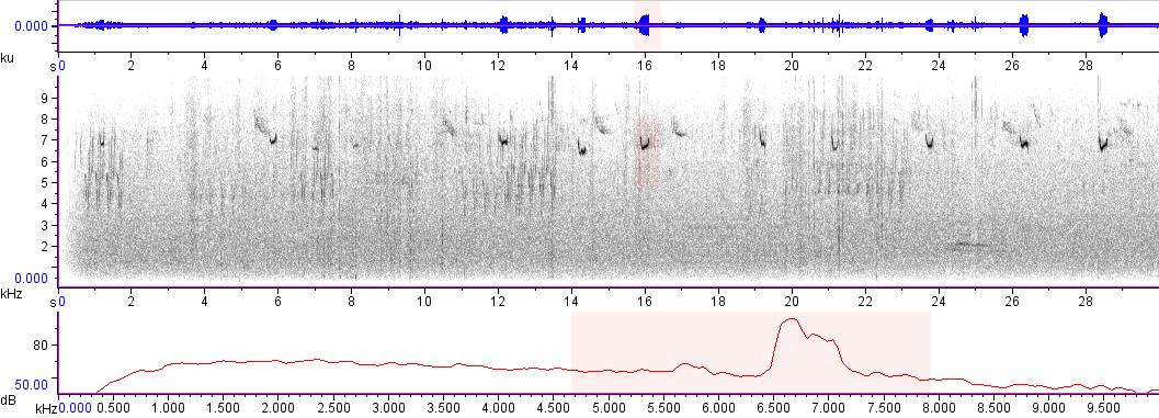 Sonogram of recording #AV 7612