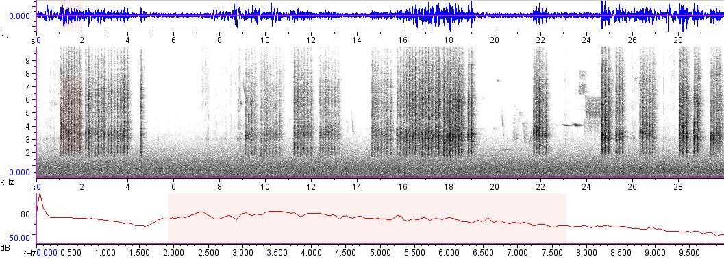 Sonogram of recording #AV 7620