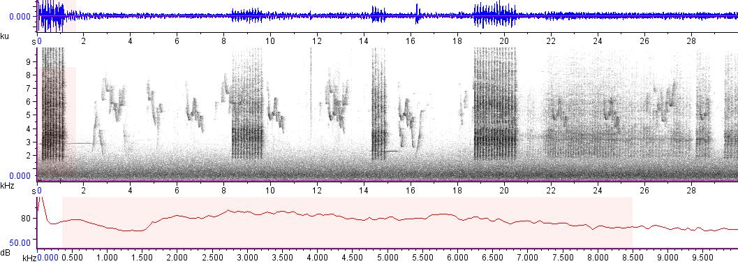 Sonogram of recording #AV 7621