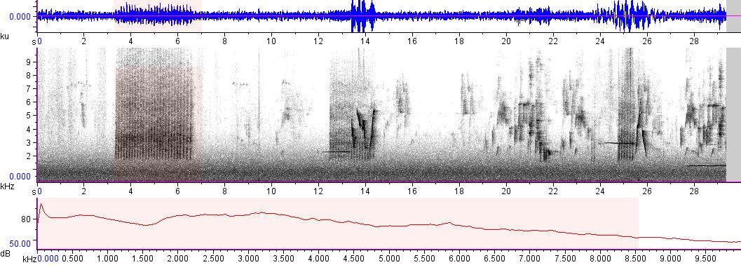 Sonogram of recording #AV 7622