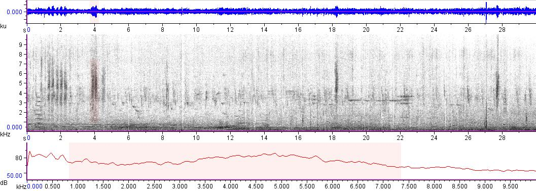 Sonogram of recording #AV 7631