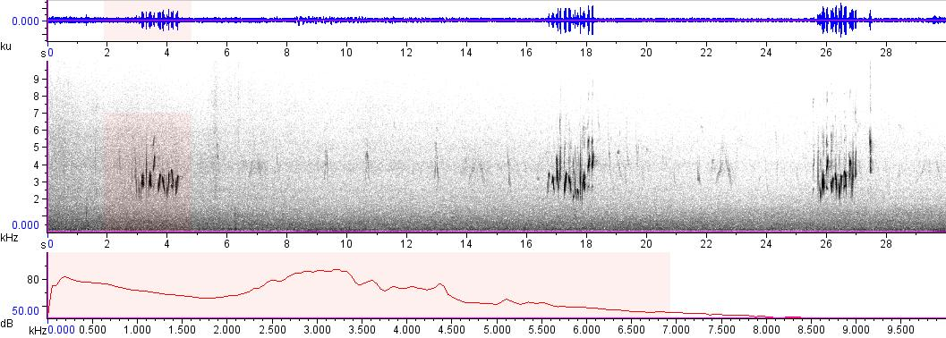 Sonogram of recording #AV 7635