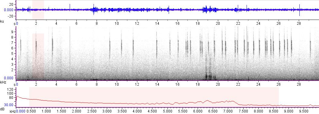 Sonogram of recording #AV 7652