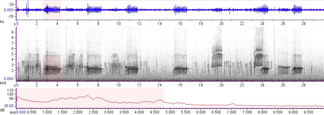 Sonogram of recording #AV 7656