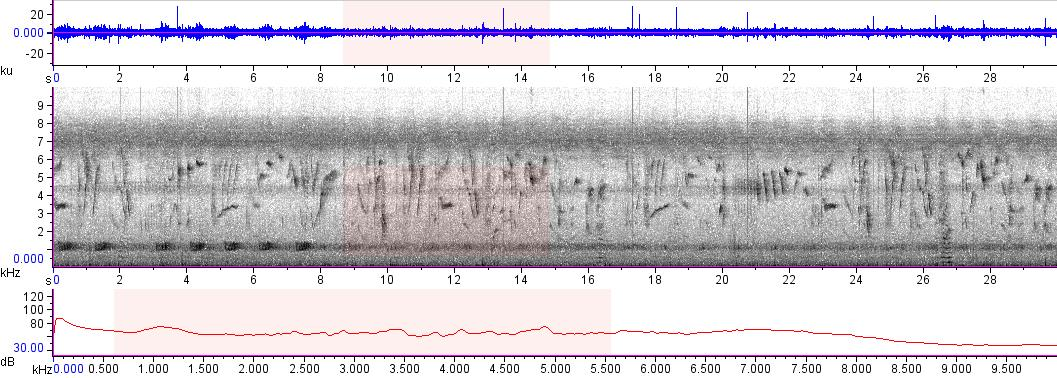 Sonogram of recording #AV 7662