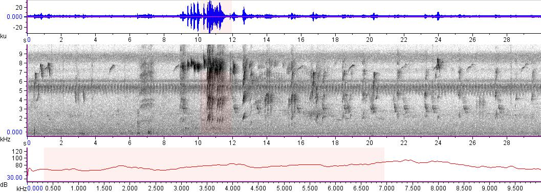 Sonogram of recording #AV 7688