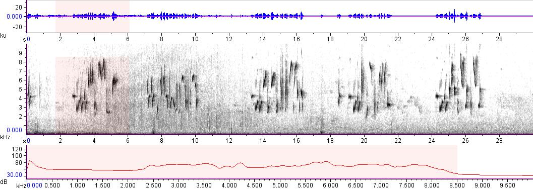 Sonogram of recording #AV 7727